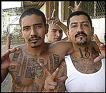 "a history of gangs in america Ms-13 has emerged as the country's most brutal street gang, and its reign of  terror  brutal mass murders committed in suffolk county's history,"" suffolk  county  since the late 1980s, the gang has spread to central american."